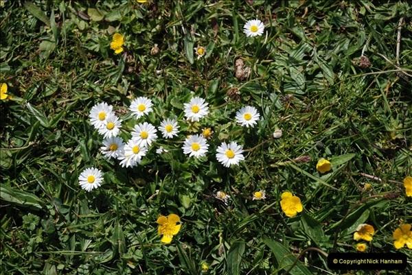 2009-05-19 Sandbanks & Studland, Dorset.  (31)031