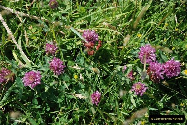 2009-05-19 Sandbanks & Studland, Dorset.  (32)032