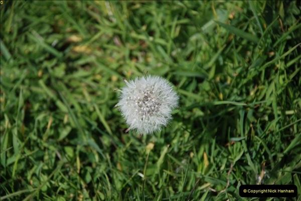 2009-05-19 Sandbanks & Studland, Dorset.  (33)033