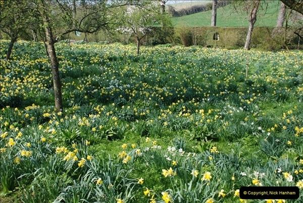 2009-04-02 Cranbourne, Dorset.  (43)043