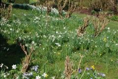 2009-04-02 Cranbourne, Dorset.  (39)039