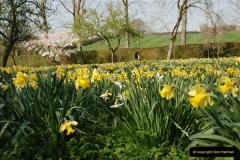 2009-04-02 Cranbourne, Dorset.  (45)045