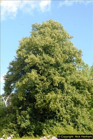 2014-08-11 The Vyne (NT) Basingstoke, Hampshire.  (65)