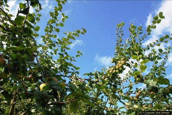 2014-08-11 The Vyne (NT) Basingstoke, Hampshire.  (70)