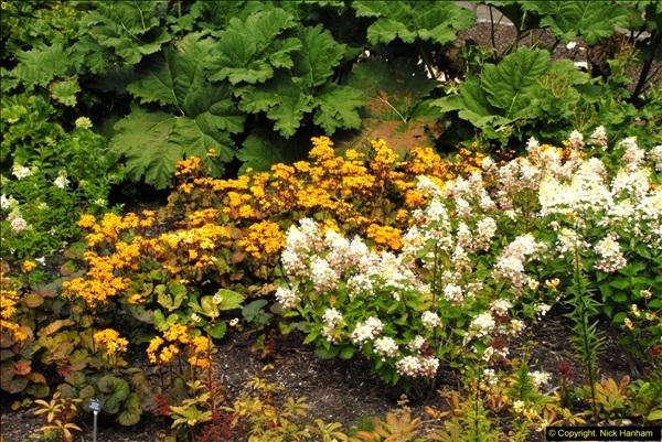 2014-08-19 Hillier Gardens, Romsey, Hampshire.  (116)