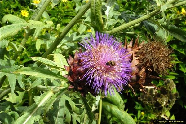 2014-08-19 Hillier Gardens, Romsey, Hampshire.  (130)