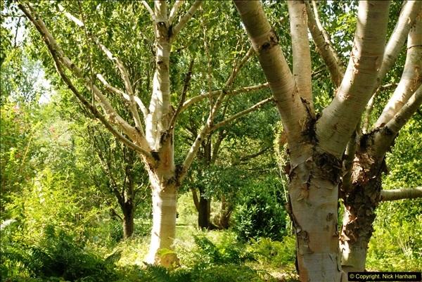 2014-08-19 Hillier Gardens, Romsey, Hampshire.  (16)