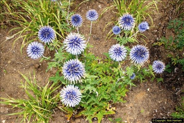2014-08-19 Hillier Gardens, Romsey, Hampshire.  (165)