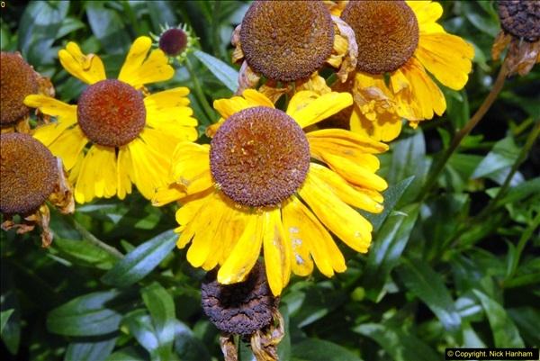 2014-08-19 Hillier Gardens, Romsey, Hampshire.  (170)