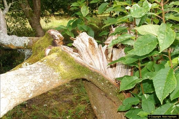 2014-08-19 Hillier Gardens, Romsey, Hampshire.  (180)
