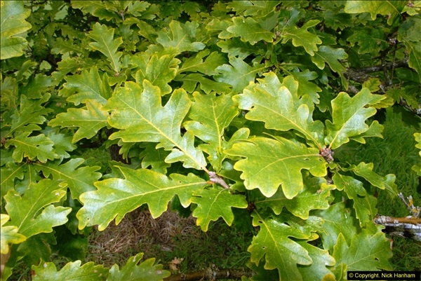 2014-08-19 Hillier Gardens, Romsey, Hampshire.  (188)