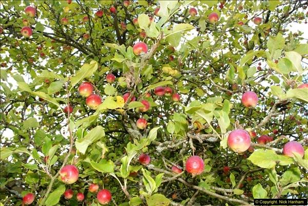 2014-08-19 Hillier Gardens, Romsey, Hampshire.  (193)