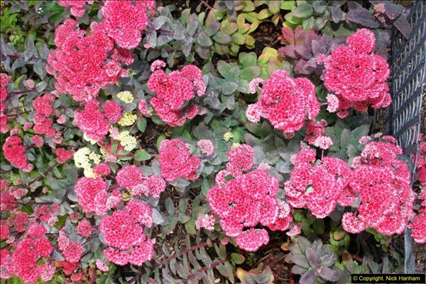 2014-08-19 Hillier Gardens, Romsey, Hampshire.  (25)
