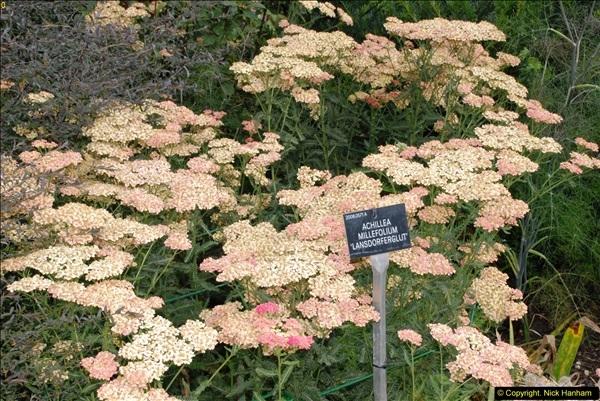 2014-08-19 Hillier Gardens, Romsey, Hampshire.  (27)