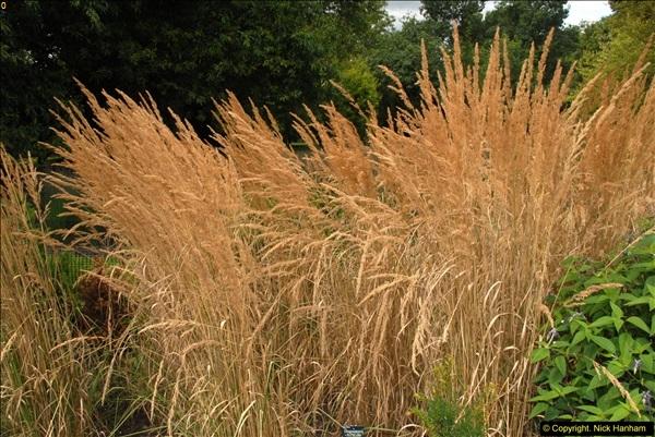 2014-08-19 Hillier Gardens, Romsey, Hampshire.  (54)