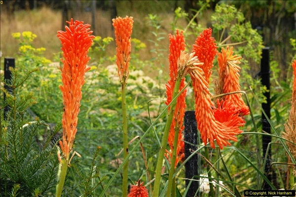 2014-08-19 Hillier Gardens, Romsey, Hampshire.  (56)