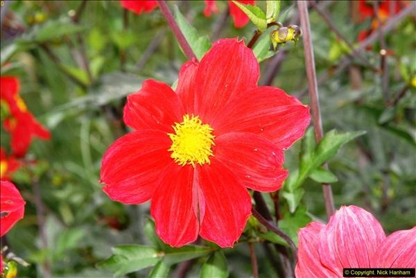 2014-08-19 Hillier Gardens, Romsey, Hampshire.  (67)