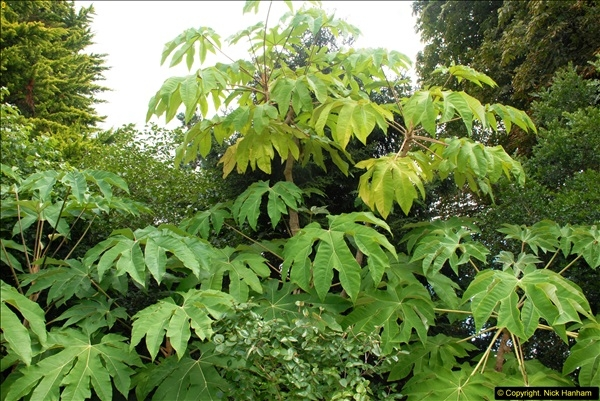 2014-08-19 Hillier Gardens, Romsey, Hampshire.  (89)