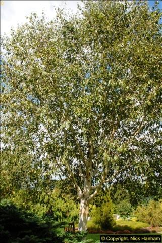 2014-08-19 Hillier Gardens, Romsey, Hampshire.  (95)
