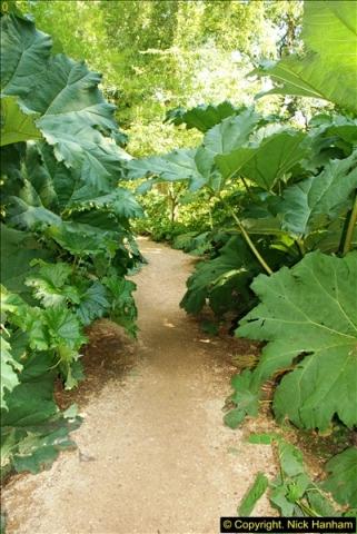 2014-08-22 Abbotsbury Tropical Gardens, Abbotsbury, Dorset.  (106)