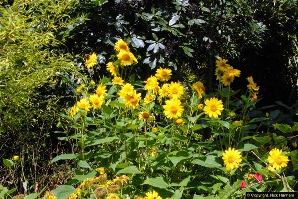 2014-08-22 Abbotsbury Tropical Gardens, Abbotsbury, Dorset.  (11)