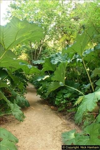 2014-08-22 Abbotsbury Tropical Gardens, Abbotsbury, Dorset.  (110)