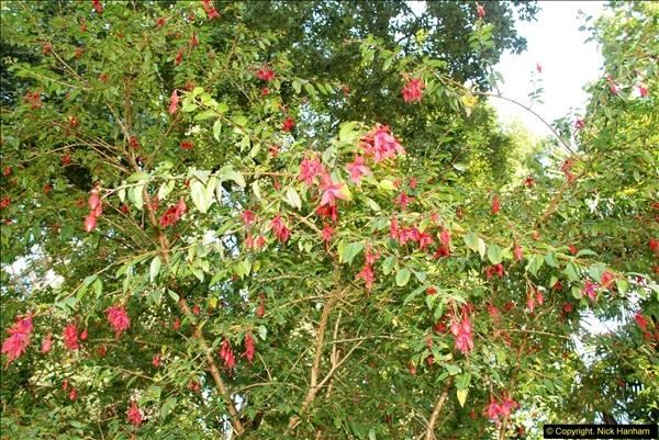 2014-08-22 Abbotsbury Tropical Gardens, Abbotsbury, Dorset.  (114)