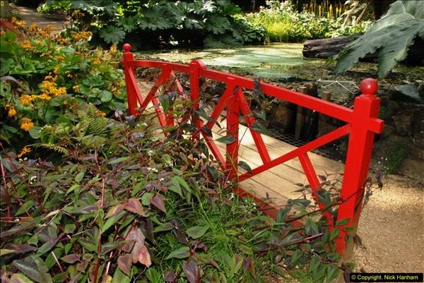 2014-08-22 Abbotsbury Tropical Gardens, Abbotsbury, Dorset.  (123)