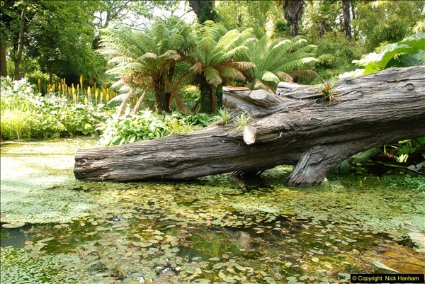 2014-08-22 Abbotsbury Tropical Gardens, Abbotsbury, Dorset.  (127)