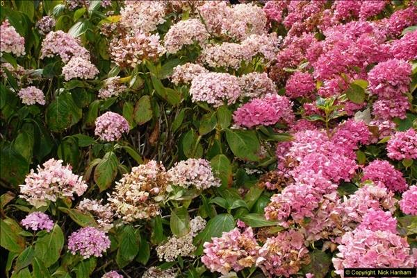 2014-08-22 Abbotsbury Tropical Gardens, Abbotsbury, Dorset.  (139)