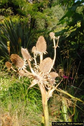 2014-08-22 Abbotsbury Tropical Gardens, Abbotsbury, Dorset.  (14)