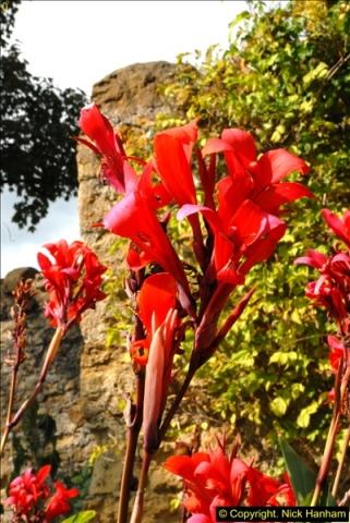 2014-08-22 Abbotsbury Tropical Gardens, Abbotsbury, Dorset.  (146)