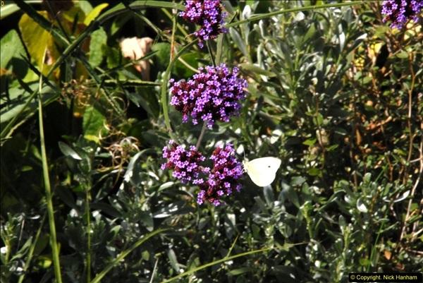 2014-08-22 Abbotsbury Tropical Gardens, Abbotsbury, Dorset.  (151)