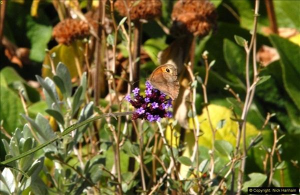2014-08-22 Abbotsbury Tropical Gardens, Abbotsbury, Dorset.  (152)
