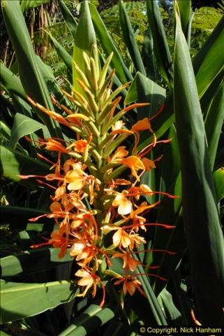 2014-08-22 Abbotsbury Tropical Gardens, Abbotsbury, Dorset.  (153)