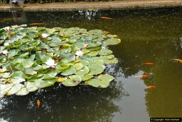 2014-08-22 Abbotsbury Tropical Gardens, Abbotsbury, Dorset.  (158)
