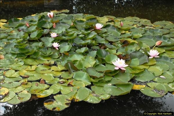 2014-08-22 Abbotsbury Tropical Gardens, Abbotsbury, Dorset.  (160)