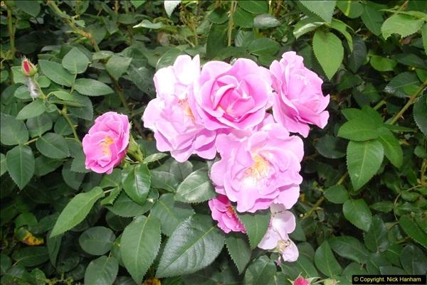 2014-08-22 Abbotsbury Tropical Gardens, Abbotsbury, Dorset.  (175)