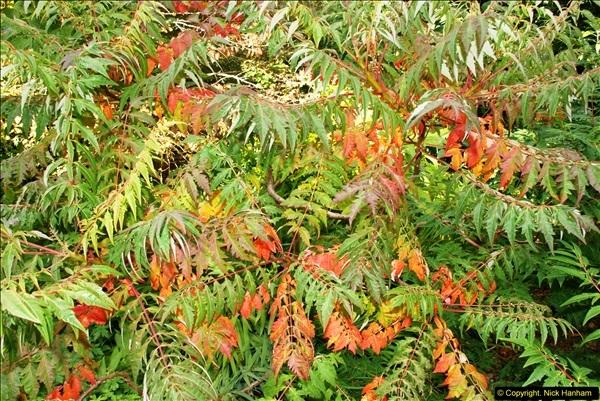 2014-08-22 Abbotsbury Tropical Gardens, Abbotsbury, Dorset.  (25)