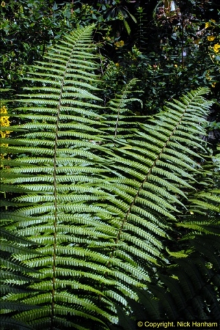 2014-08-22 Abbotsbury Tropical Gardens, Abbotsbury, Dorset.  (33)