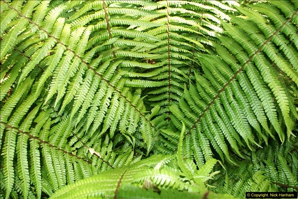 2014-08-22 Abbotsbury Tropical Gardens, Abbotsbury, Dorset.  (34)