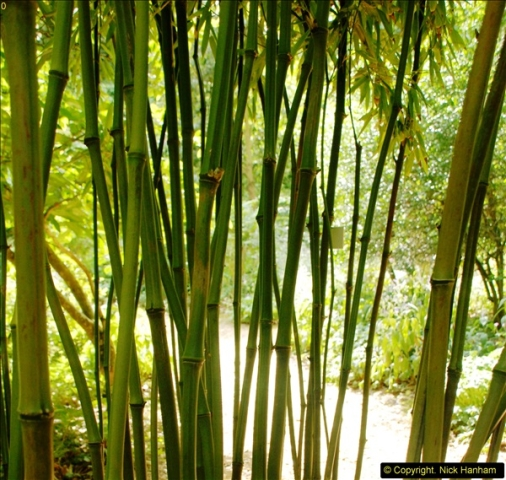 2014-08-22 Abbotsbury Tropical Gardens, Abbotsbury, Dorset.  (56)
