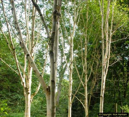 2014-08-22 Abbotsbury Tropical Gardens, Abbotsbury, Dorset.  (60)