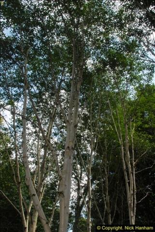 2014-08-22 Abbotsbury Tropical Gardens, Abbotsbury, Dorset.  (62)