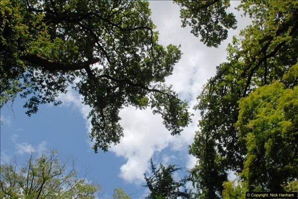 2014-08-22 Abbotsbury Tropical Gardens, Abbotsbury, Dorset.  (73)