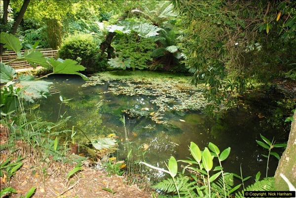 2014-08-22 Abbotsbury Tropical Gardens, Abbotsbury, Dorset.  (75)