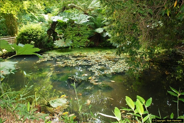 2014-08-22 Abbotsbury Tropical Gardens, Abbotsbury, Dorset.  (76)