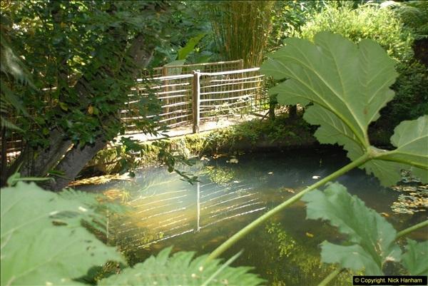 2014-08-22 Abbotsbury Tropical Gardens, Abbotsbury, Dorset.  (77)