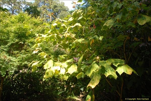 2014-08-22 Abbotsbury Tropical Gardens, Abbotsbury, Dorset.  (79)