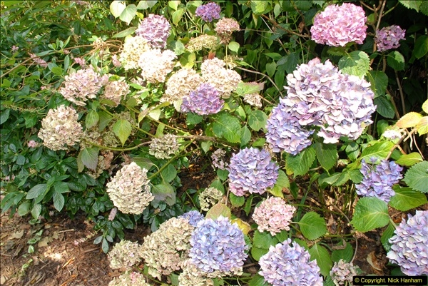 2014-08-22 Abbotsbury Tropical Gardens, Abbotsbury, Dorset.  (82)
